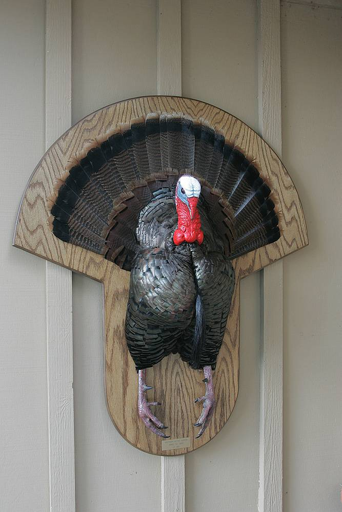 Turkey Mounts Car Interior Design